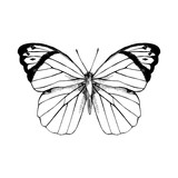 Hand drawn Great Orange Tip - Hebomoia glaucippe - butterfly - 254892028