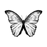 Hand drawn Blue Morpho butterfly - 254892083
