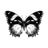 Hand drawn butterfly on white background - 254892240
