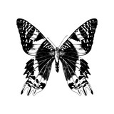 Hand drawn Madagascan Sunset Moth - 254892294