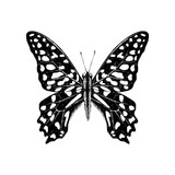 Hand drawn Tailed Jay Butterfly - Graphium agamemnon - 254892460