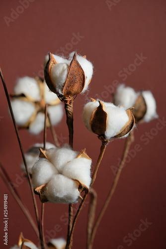 Cotton branches in vase © Laurentiu Iordache