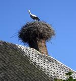 Havezathe Havixhorst Meppel. Netherlands. Storknests at chimneys