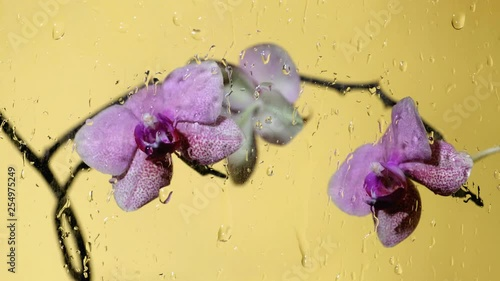 Orchid near the glass with drops and drips of water
