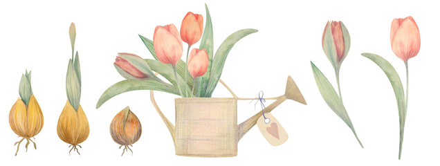 Watercolor hand drawn spring set with tulips. Planting flowers. © NataliaArkusha