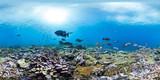 360 of fish over healthy reef