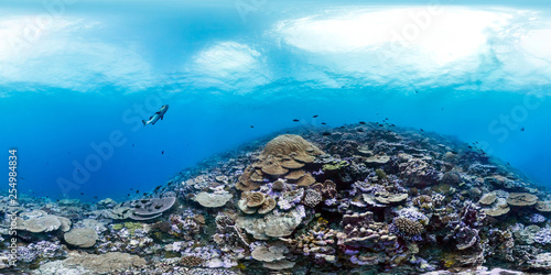 360 of healthy coral in Palmyra