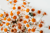 Little daisy flowers bouquet over white. Summer or spring nature background. Soft focus, top view, close-up composition.