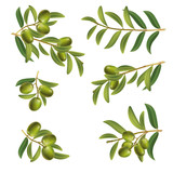 Set of olive twigs green on white background. isolate.