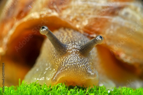 obraz PCV Close up beautiful Snail in the garden