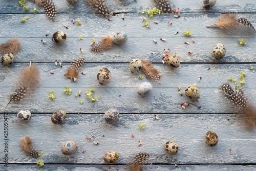 Easter background, quail eggs, feathers and yellow chrysanthemum over wooden background