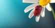 Leinwanddruck Bild - ladybird on camomile flower