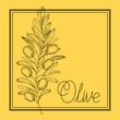 olive plant drawn italian food