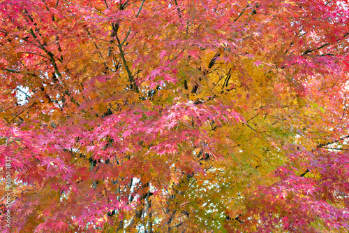 mata magnetyczna Autumn leaves in Japan