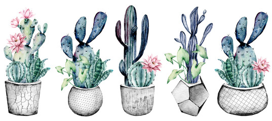 Cactus in pot, set watercolor floral illustrations, isolated on white background. Flowers perfectly for posters, greeting cards, stickers, icons. Green, grey, blue, pink colors.  © Larisa