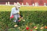 CHINE pollution air carbone co2 santé parc jardin