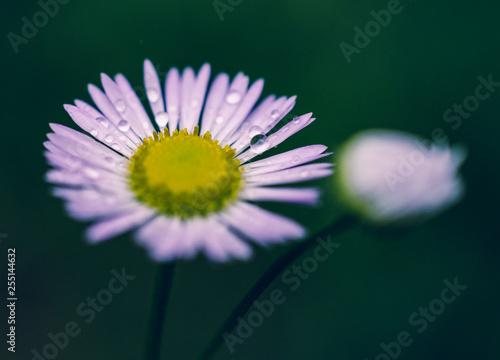 Summer field flowers - 255144632