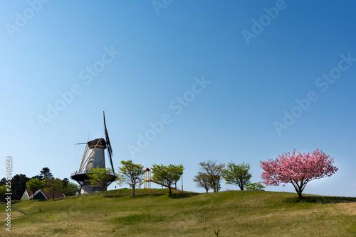 宮城長沼フートピア公園の帆を張って回るオランダ風車とサクラ