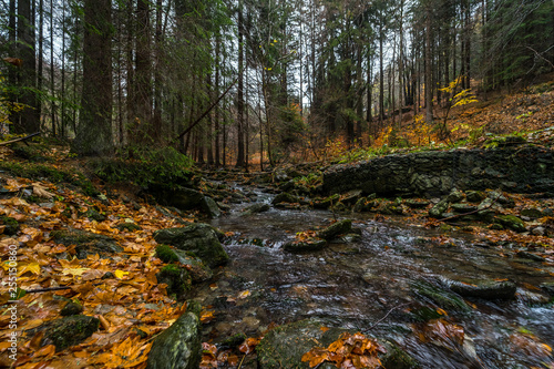 Foto Murales A small river in the autumn forest on the slopes of the Krkonose Mountains (Giant Mountains). Czech Republic.