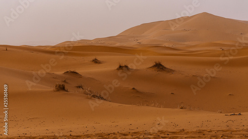 Panoramic landscape view of the seas of dunes of Erg Chebbi near Merzouga in southeastern Morocco