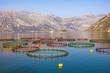 Fish farm in Adriatic Sea.  Beautiful Mediterranean landscape. Montenegro, Bay of Kotor