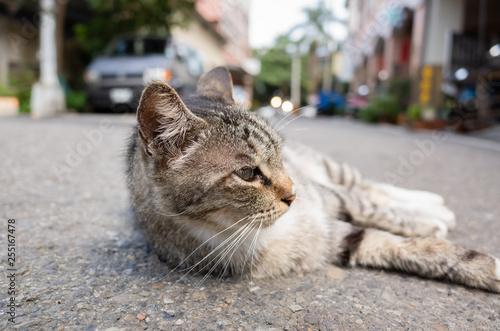 stray cat lying at street - 255167478