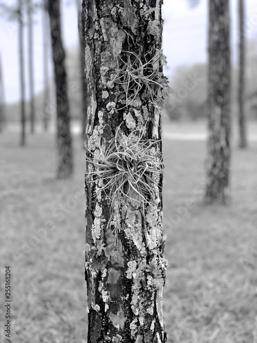 Black and white tree in forest