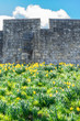 York (England) city walls in Spring