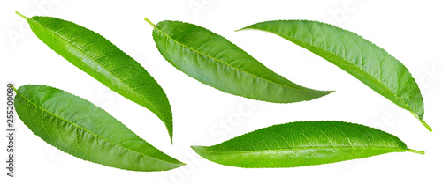 Peach leaf isolated on white