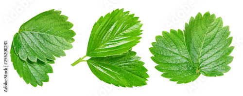 Strawberry leaves Clipping Path - 255200231