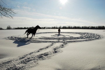 The horse runs in a circle in the snow.