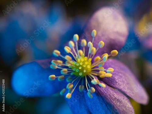violet blue flowers macro photo. Flower buds closeup - 255223488