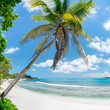 Kokospalme am Strand in den Tropen