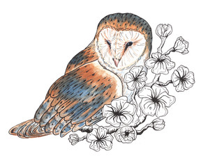 Watercolor illustrations barn owl on  flowering branch