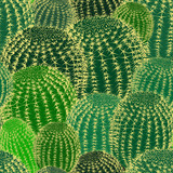 Cactus plants texture seamless pattern background - 255264661