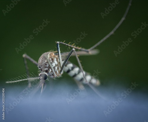 closeup with mosquito - 255285406