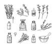 Lavender set. Vector illustration. Sketch