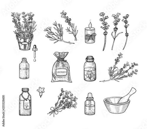 Lavender set. Vector illustration. Sketch - 255328600