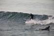 surfista en california