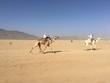 Leinwandbild Motiv Course de chameaux dans le désert de l'Aïr, Niger