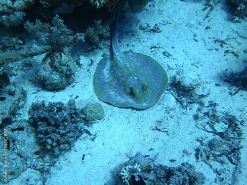 obraz PCV 2014, Egypt, diving, depth, entertainment, extreme, underwater, wreck,Thistlehorm