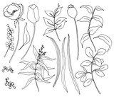 Vector collection of hand drawn plants with greenery and flowers. Botanical set of sketch flowers and branches with eucalyptus leaves isolated on white background for design, print or fabric. - 255383616