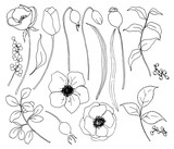 Vector collection of hand drawn plants with flowers. Botanical set of sketch flowers and branches with eucalyptus leaves isolated on white background for design, print or fabric. - 255383631