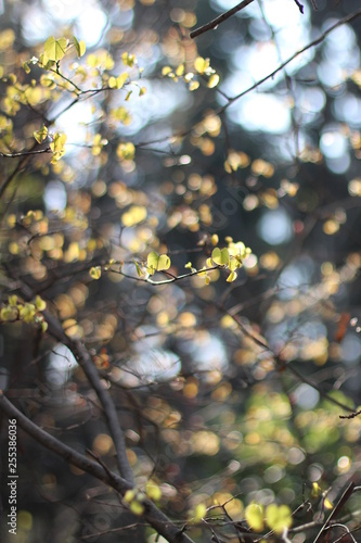 Foto Murales Closeup leafs with blur background