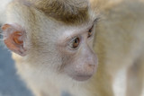 Close up portrait of monkey