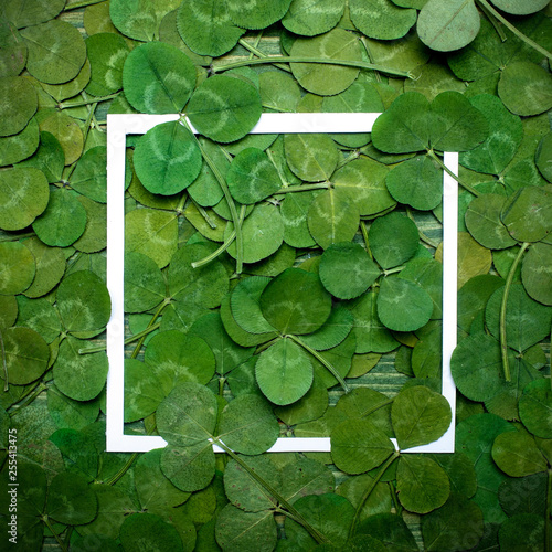 Green leaves of clover and paper frame. Top view. Flat lay - 255413475