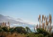 Quadro Mendocino Headlands