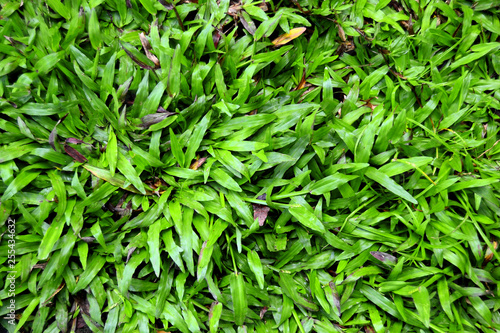 image-photo/background-green-grass-texture - 255434632