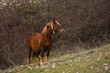 cavallo al pascolo brado in montagna
