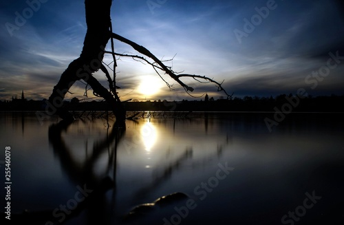 obraz lub plakat sunset under the tree